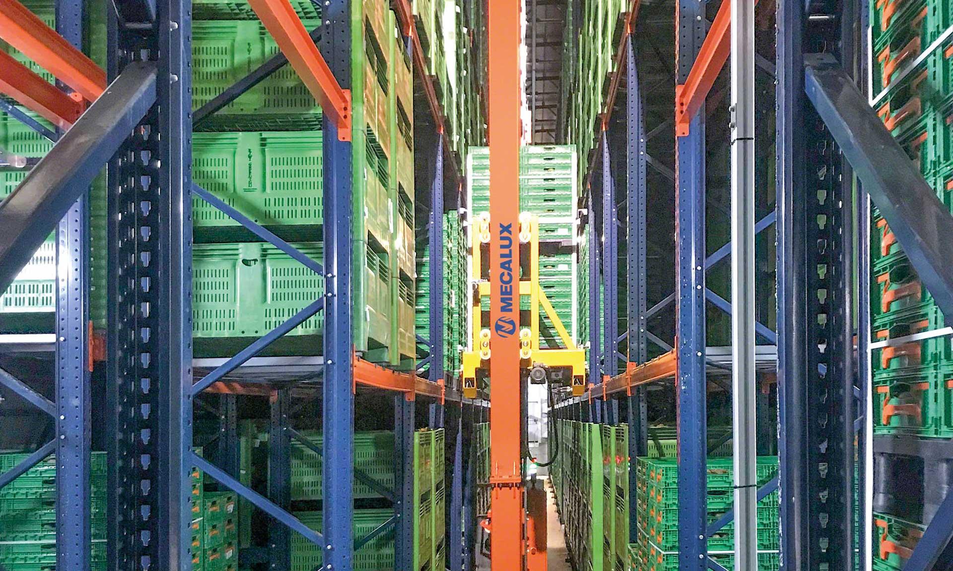 Kiwi Greensun: el punto de maduración perfecto en un almacén refrigerado